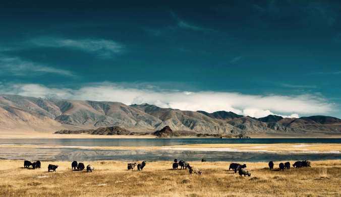 Mongolia 2